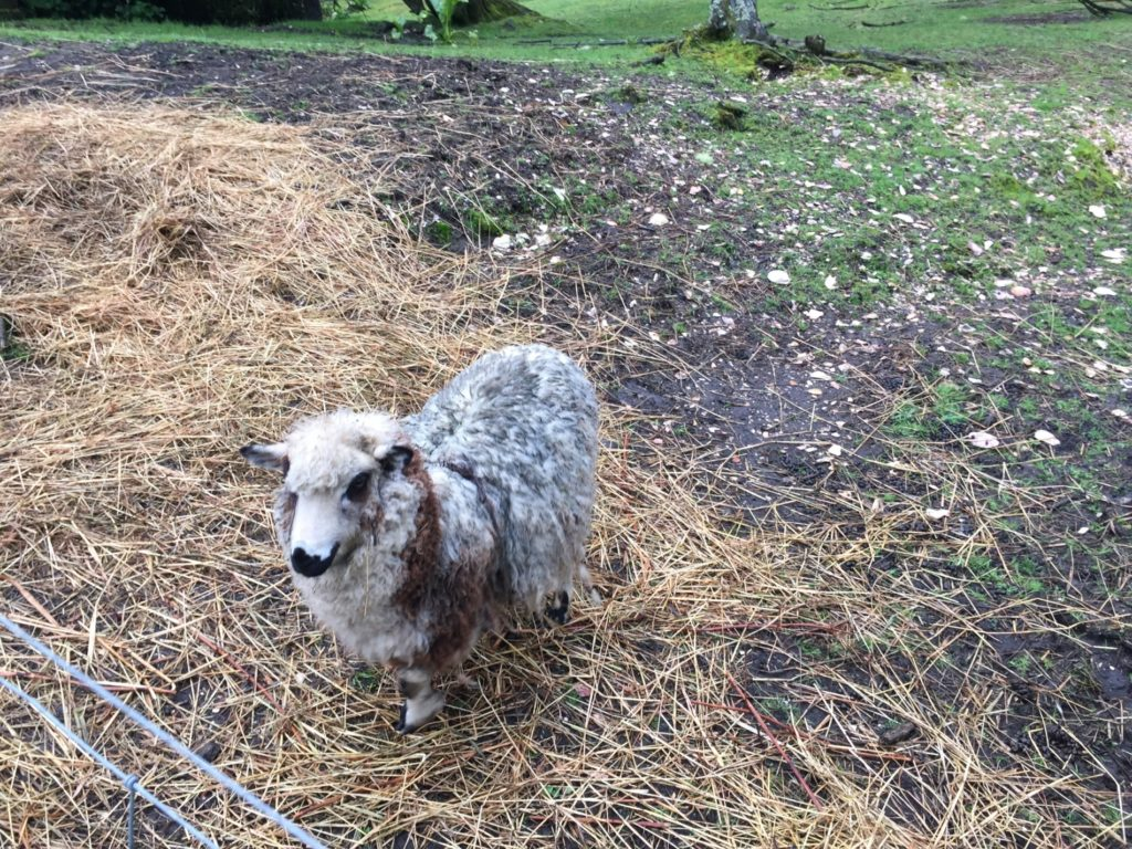 ovce trochu jak z hororu