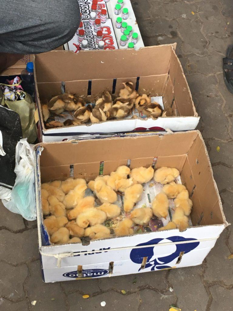 Kuřata na trhu