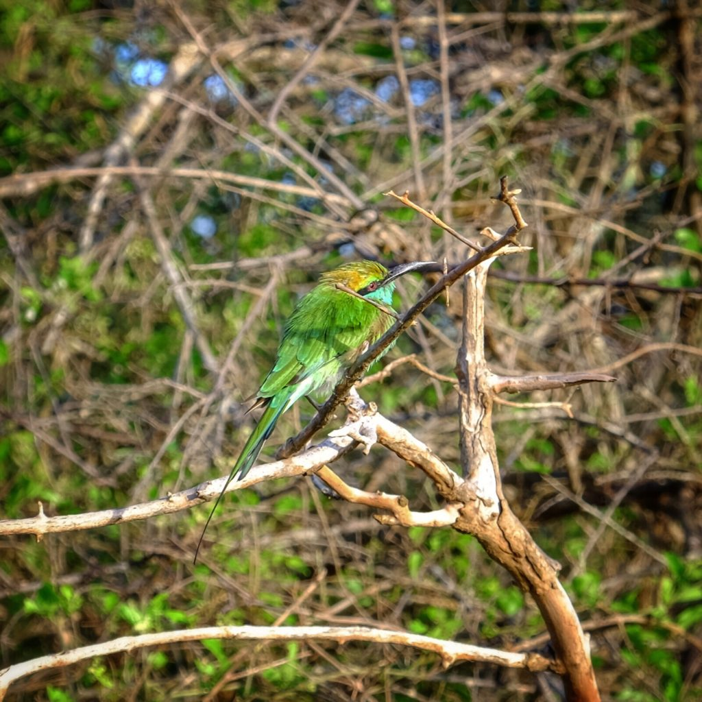 nějakej pták