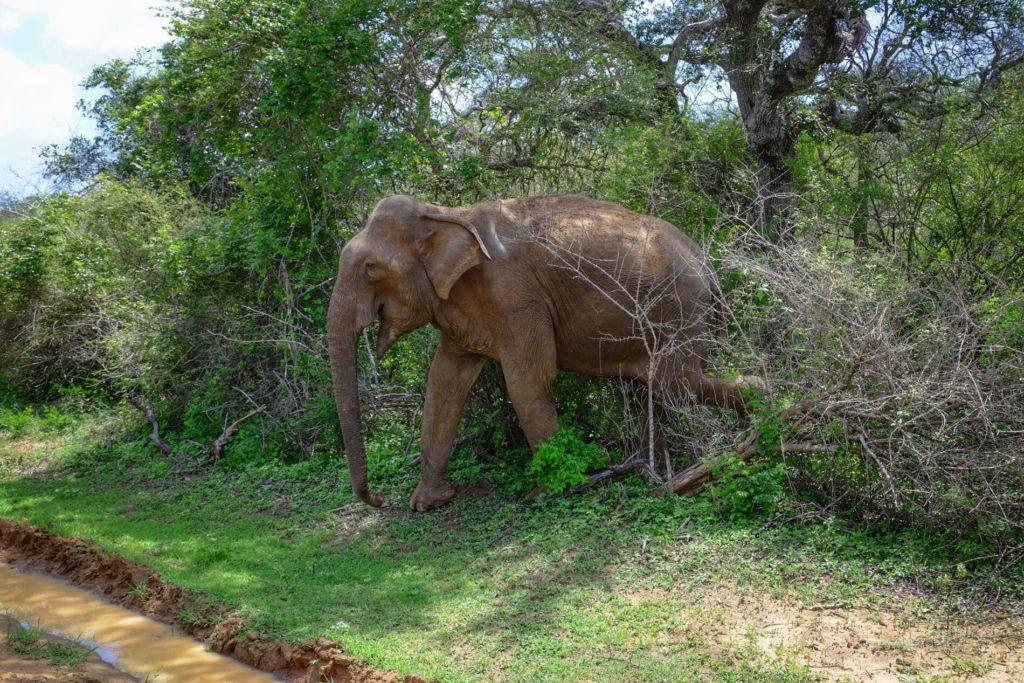 vysmátej sloník