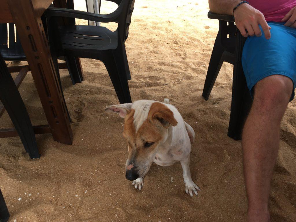 Náš nový pes Karel
